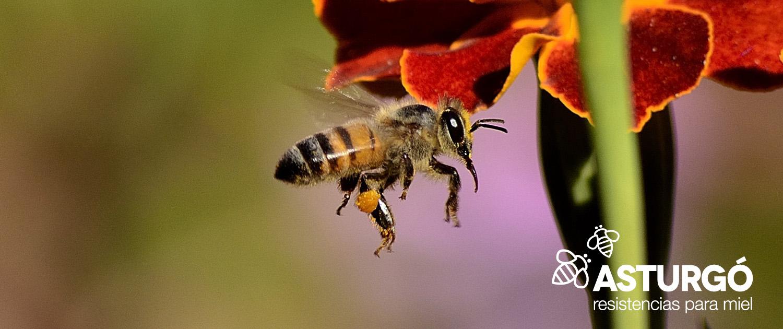 Resistencias para miel. Resistencias Asturgó